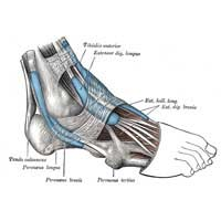 Cavus Feet Neurological Disorder